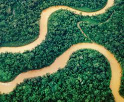 selva tropical de la Amazonia