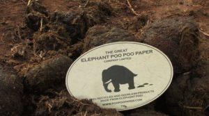 papel-elaborado-con-heces-de-elefante